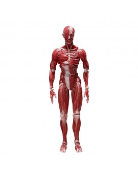 Original Character Figma Action Figure Human Anatomical Model 15 cm